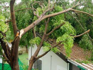 Dangerous tree removal