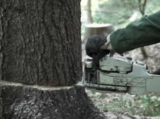 Reliable tree feller